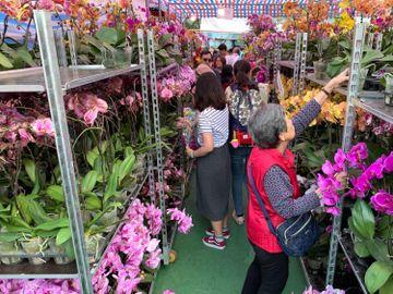 年宵取消-本地花農-屋邨賣花-補貼-香港財經時報HKBT