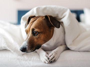 消委會|Staycation優惠不似預期、寵物友善酒店只接待狗!貓要另收費