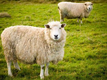 羊毛出自羊身上, 小心週期性高息股, 債券收息, 穩陣, 賺息蝕價, 龔成, 香港財經時報HKBT