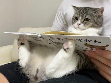 YouTuber,日本人氣貓貓麻糬丸,YouTube頻道,YouTuber,健力士世界紀錄